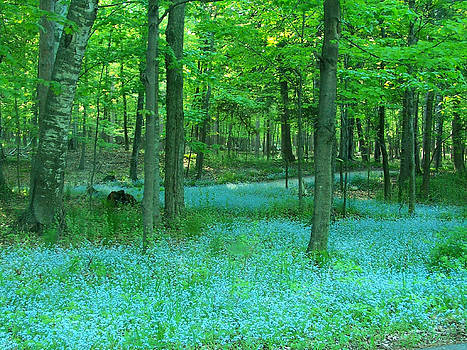 David T Wilkinson - Forget-me-nots in Peninsula State Park