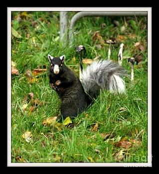 Gail Matthews - Fox Squirrel