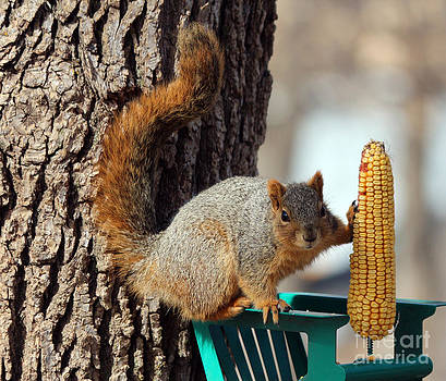 Fox Squirrel by Lori Tordsen
