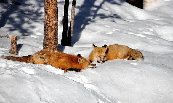 Matt Swinden - Foxy Couple 2