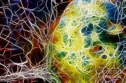 Vivian Christopher - Fractal Abstract 2