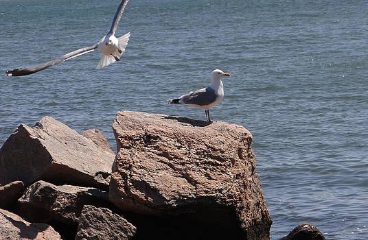 Freedom to be. by Surabhi Jain