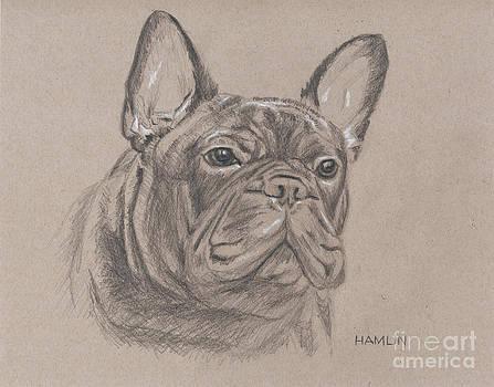 French Bulldog - Snickers by Steve Hamlin