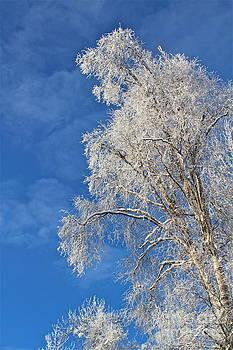 Frosty by Rick  Monyahan
