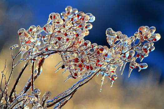 Frozen by Philip Neelamegam