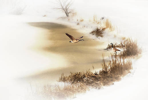 Frozen Pond by Kathy Jennings