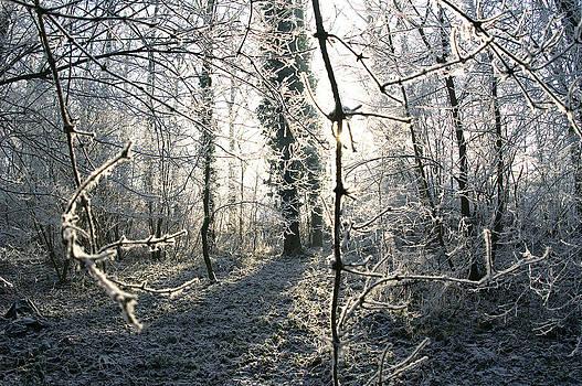 Frozen trees by Erik Tanghe