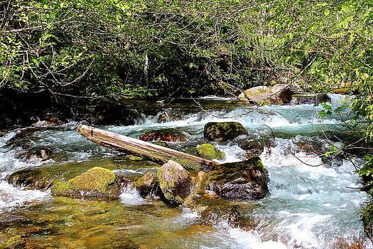 Goddard Creek by Tim Rice