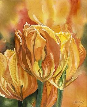 Alfred Ng - golden tulips