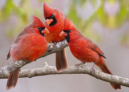 Gossip Session by Bonnie Barry
