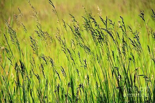 Roland Stanke - grasses