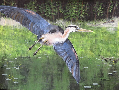 Great Blue Heron by Anthony Gerardi