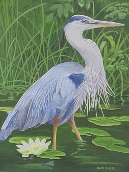 Great Blue Heron by James Lawler