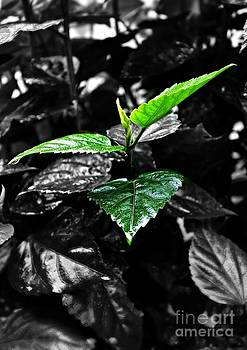 Green by Bobby Mandal