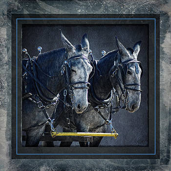 Grey Mule Team by Bethany Caskey