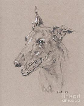 Greyhound - Sabel by Steve Hamlin