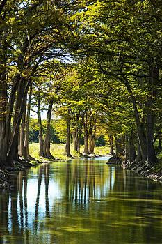 Robert Anschutz - Guadalupe Cypress