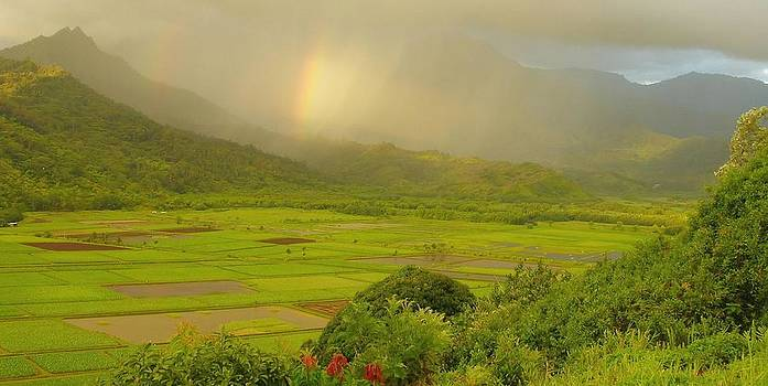Hanalei Valley Rainbows - Kauai by Stephen  Vecchiotti