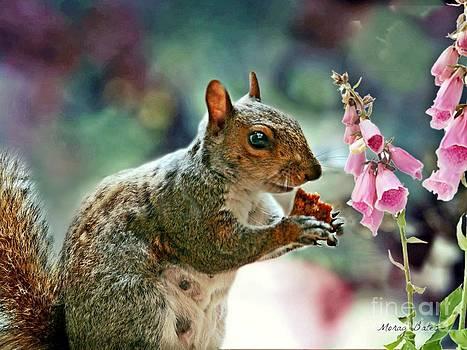Harry the Squirrel by Morag Bates