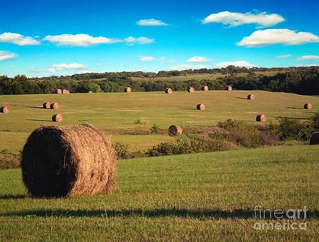 Hay Fields by Rex E Ater