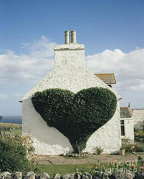 David Parker - Heart-shaped Ivy Vine