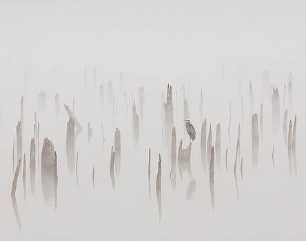 Billy  Griffis Jr - Heron on a Foggy Day