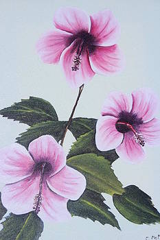 Hibiscus  by Christine McMillan