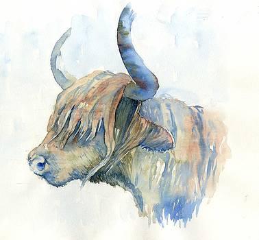 Highland cow by Tania Vasylenko