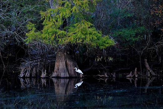 Carol Kay - Hillsborough River Egret 02