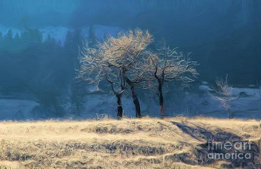 Roland Stanke - hoar frosted trees