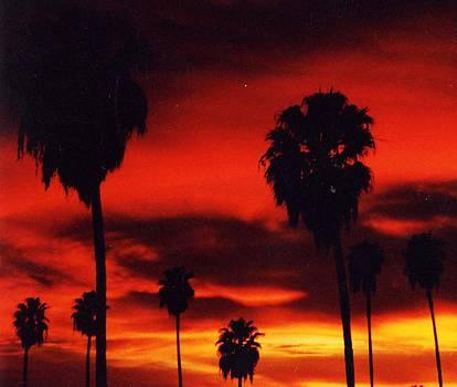 Hollywood Sunset by Jennifer Ott