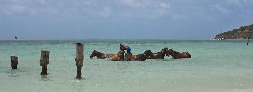 Horses at sea by Pier Giorgio Mariani