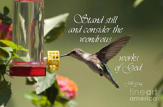 Jill Lang - Hummingbird with Scripture