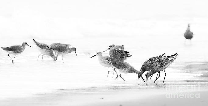 Hungry Birds by Patty Descalzi