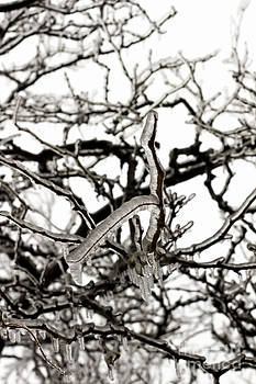 Ice on branches by Blink Images