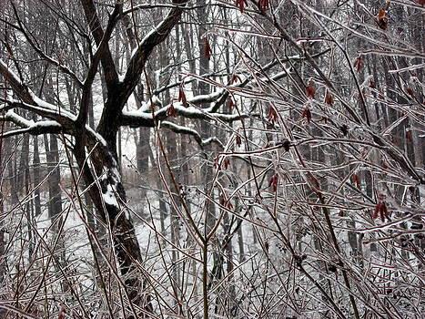 Ice Storm by David Olson