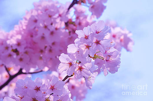 In Bloom by Christian LeBlanc