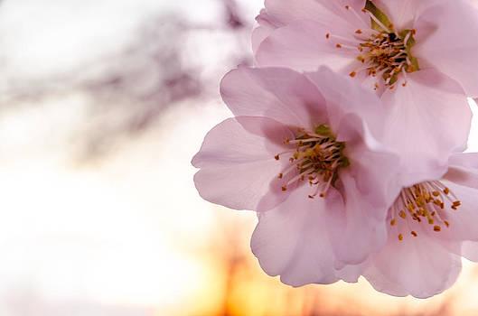 In to the bloom. by Slavica Koceva