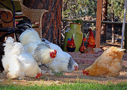 John and his hens by Susie Fisher