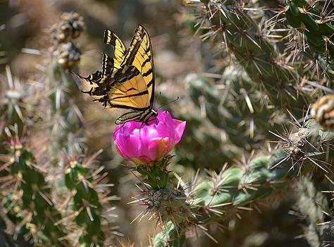 John Dunn Bridge Butterfly by Charles Frieda