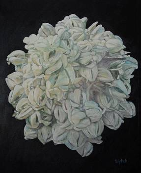 Sandra Lytch - Joshua Tree Bloom Mandala