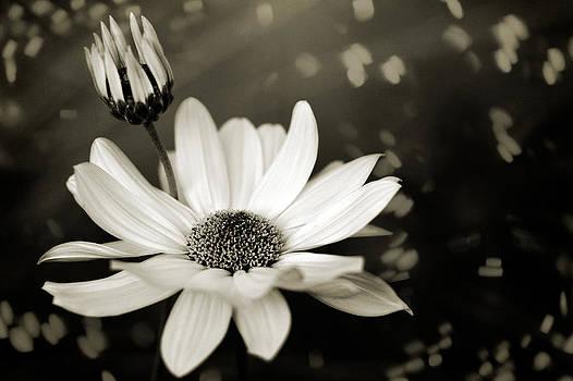Zoran Buletic - Just Flower IX