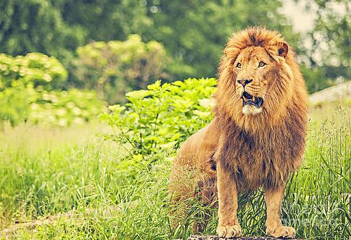 King Lion by Izabela Kaminska