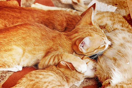 Kittens having breast feed by her mum by Jeng Suntorn niamwhan