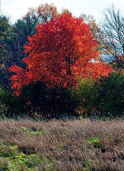 Knox Farm Tree by Kelly E Schultz