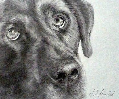 Labrador by Skyrah J Kelly