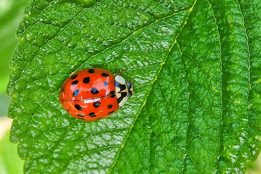 Ladybird by Michele Wright