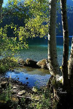 Lynn Bawden - Lake Crescent Aspens