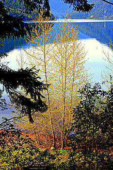 Lynn Bawden - Lake Crescent Spring