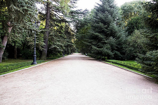 Large pathway in a park by Stefano Piccini